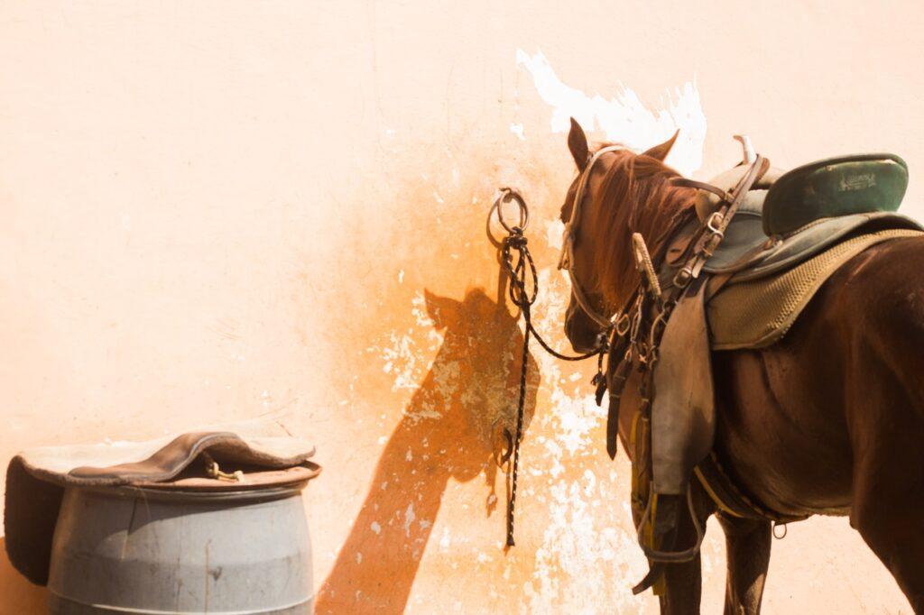 nasedlaný kůň na úvaze, vedle stojí barel